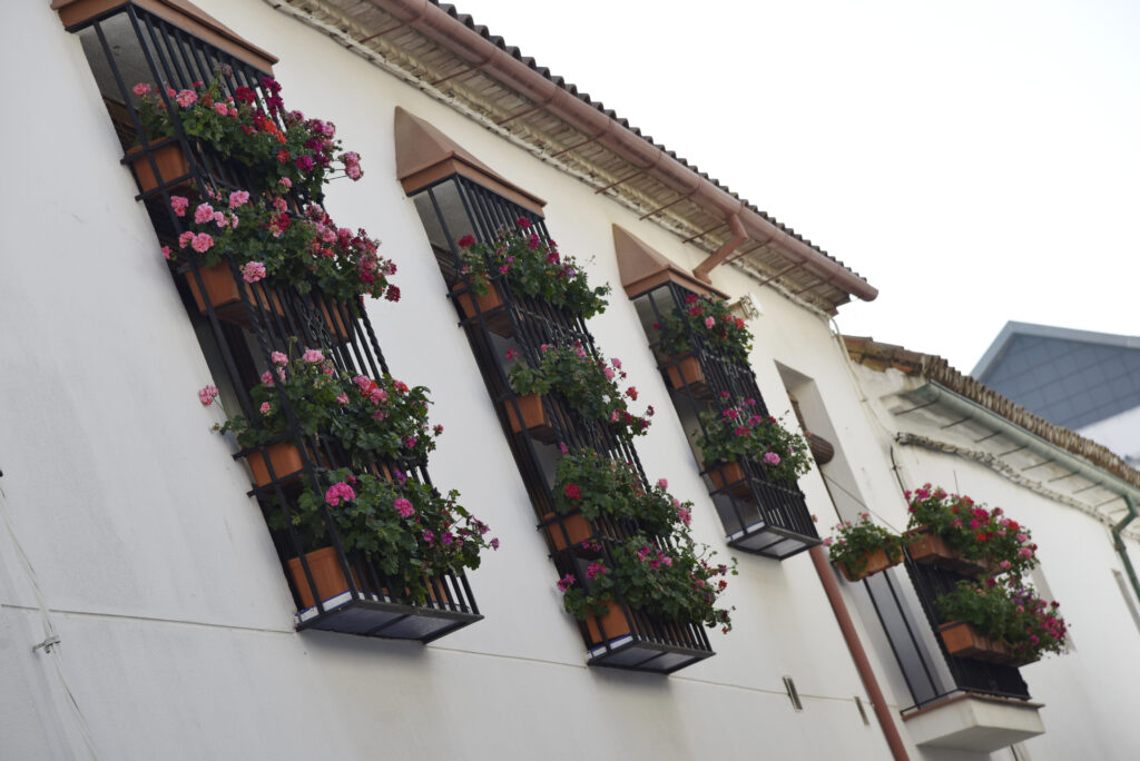 Balcones Patio San basilio